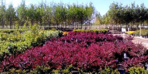 shrubs or trees?